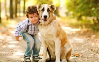 Pet Travel Checklist | Harmony Animal Hospital