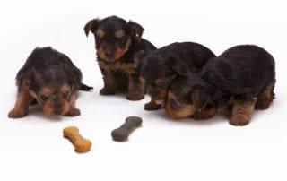Dog Bones, Apex NC | Harmony Animal Hospital