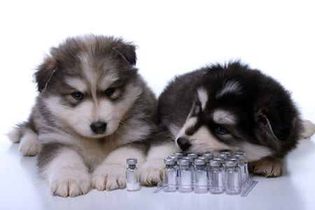 Pet immuniations and vaccines