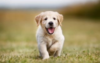 Puppy socialization leads to a happy pet and pet parent.