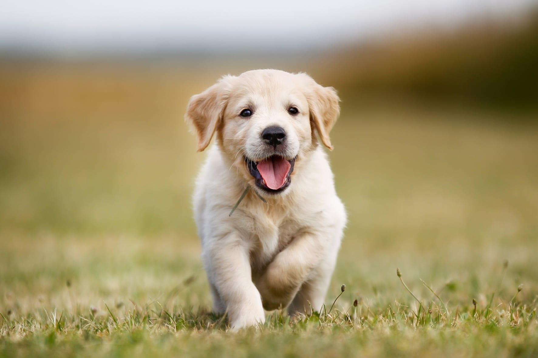 Dogs Archives - Harmony Animal Hospital
