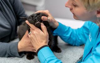 Vet examining a cat's teeth-pet dental-health