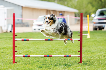 Enhance Performance of Working Dogs
