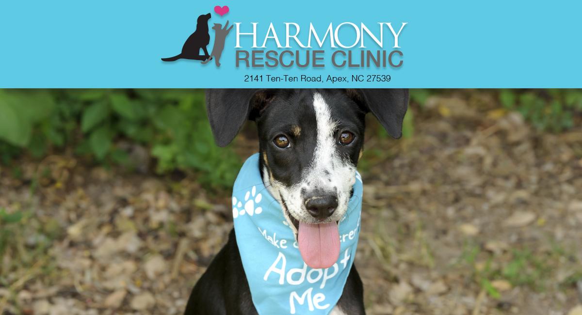 Rescue Clinic Apex Nc Harmony Animal Hospital