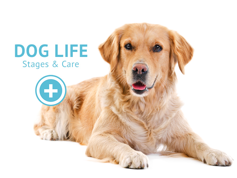 Dog Life Stages