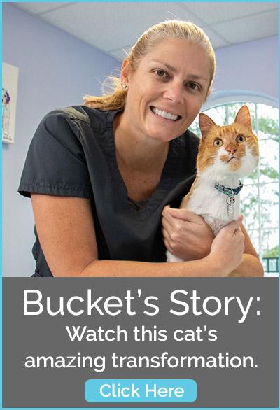 Dr. Jodi talks dental care for your pet